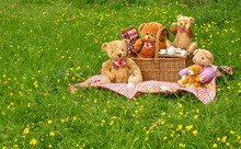 Teddy Bear's Picnic.  Five Cute Bears Enjoy A Picnic In Swaledale's Wildflower Meadows With Colourful Yellow Buttercups.  Traditional Wicker Basket And Red Gingham Table Cloth.  Space For Copy.