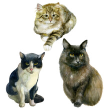 Watercolor Illustration, Set. Images Of Cats. Black, Tabby And Fluffy Cats.