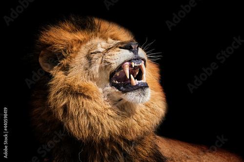 Lion portrait detail Fotobehang