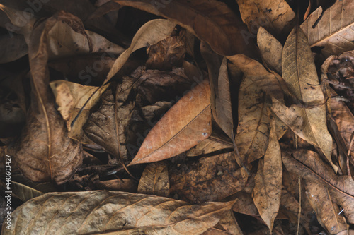 Vászonkép dry leaves used to compost