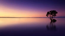 Serene Landscape - Isolated Tree Reflected On Lake At Sunset