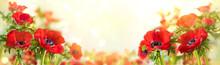 Red Anemone Flowers. Windflower Buttercup Or Poppy Anemone On Meadow. Beautiful Wild Flowers.