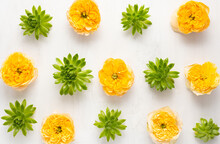 Composition Of Beautiful Green Succulent Plants And Yellow Garden Roses On Light Background. Top View, Copy Space