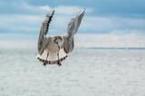 Fototapeta Fototapety z morzem do Twojej sypialni - mewa w locie