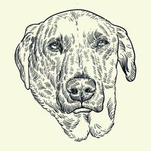 Vintage Hand Drawn Dog Head