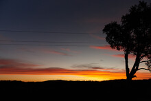 Silhouette Of Tree In Landscape With Powerlines At Dusk