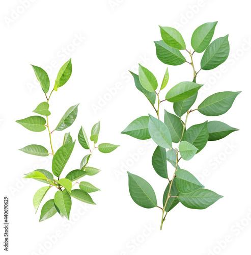 Obraz na plátne Set of branch with green leaves