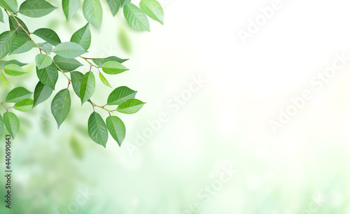 Foto Cherry tree branch with green leaves on blurred sunny background
