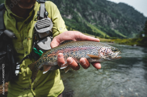 Murais de parede Wilde Regenbogenforelle gefangen beim Fliegenfischen