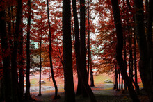 View Of The Picnic Area Through The Trees With Red Leaves In The Autumn In Abant Lake National Park