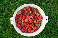 Harvest Ripe, Delicious Strawberries, In A Cup On Green Grass