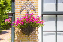 Hanging Basket With Pink Flowers In Bourtange