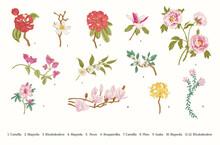 Spring Flowers. Vector Vintage Botanical Illustration. Set