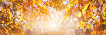 Golden Brown Tree Leaves And Autumn A Bright Sunny Yellow Sky Background At Sunrise.