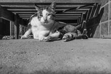 Um Gato Descansando Debaixo De Uma Espreguiçadeira. Imagem Em Preto E Branco.