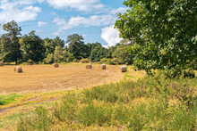 Harvest In The Summer - Freshly Cut Field On The Background Of Trees.