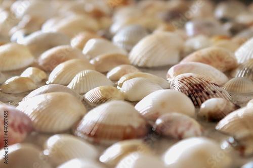 Shell Fototapet