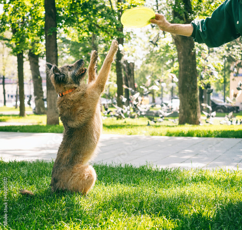 Canvas-taulu The owner trains his dog in the park, the pet standing on its hind legs on the g