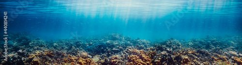 Fotografia Underwater coral reef on the red sea