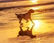 Dogs having fun on the beach in California
