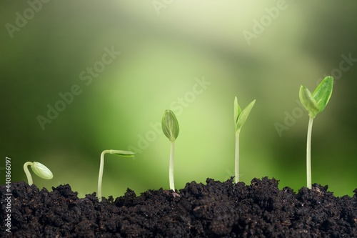 Obraz na płótnie Shows the stages of green trees growing on the ground in a rich natural environment
