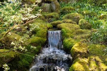 Closeup shot of a babbling waterfall through mossy rocks in a rainforest