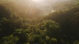 Jungle au lever du soleil