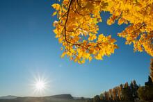 Bright Yellow Autumn Leaves With Morning Sun Shining Above The Horizon At Lake Wanaka, South Island