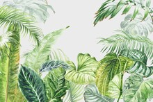 Watercolor Tropical Wall Mural With Palm Tree Leaves. Watercolour Illustration.