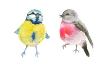 Singing Small Bird Watercolor Painting Set Of 2, Animal Collection Clip Art Or Elements Artwork, Hand Drawn Isolated On White Background