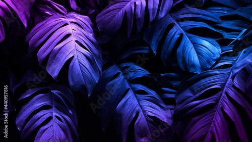 Neon tropical Monstera leaf  banner