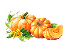 Fresh Ripe Yellow Pumpkins Or Squash, With Leaves And Flower. Watercolor Hand Drawn Illustration, Isolated  On White Background