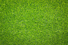 Top View Green Grass Texture For Background