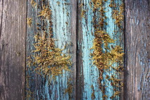 Moss On Blue Wooden Planks