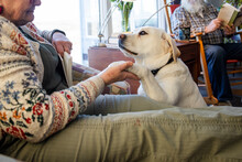 Dog Offering Paw To Woman Sitting Reading