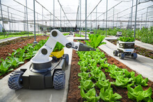 Agriculture Robotic And Autonomous Car Working In Smart Farm, Future 5G Technology With Smart Agriculture Farming Concept