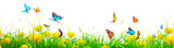 Fototapeta Dmuchawce - Beautiful nature view of butterfly on blurred background in garden.