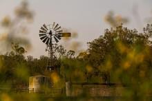 Windmill Amongst Trees On A Farm