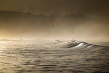 Early Morning Misty Beach Scene
