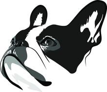 Shorthaired French Bulldog Head Vector Illustration