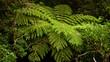 Farne – Gefäßsporenpflanzen,   Sporen auf den Blattunterseiten  Neuseeland Regenwäldern