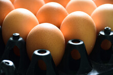 High Angle View Of Eggs In Row