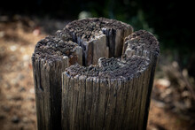 Close-up Of Wooden Tree Stump On Field