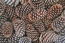 Full Frame Shot Of Pine Cones