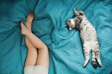 Scottish Cat And Baby Are Lying On The Bed.