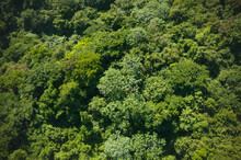 Tropics And Rainforest Aerial Photography View Far From Above With Drone