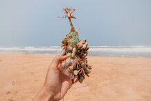Hand Holding Barnacle Covered Light Bulb At Beach Against Clear Sky