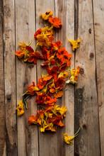 High Angle Close Up On Edible Orange Nasturtium Flowers