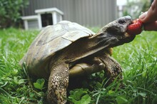 Close-up Of Human Hand Feeding Turtle On Field