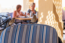 Birds Sitting On Chair At Cafe